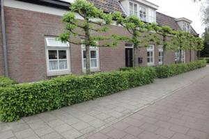 Bekijk woning te huur in Eindhoven Rijnstraat, € 1300, 150m2 - 338495. Geïnteresseerd? Bekijk dan deze woning en laat een bericht achter!