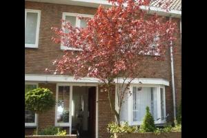 Bekijk appartement te huur in Den Bosch Kogelbloemstraat, € 790, 45m2 - 289906. Geïnteresseerd? Bekijk dan deze appartement en laat een bericht achter!