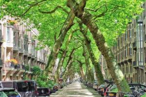 Bekijk appartement te huur in Amsterdam Okeghemstraat, € 1750, 62m2 - 373330. Geïnteresseerd? Bekijk dan deze appartement en laat een bericht achter!